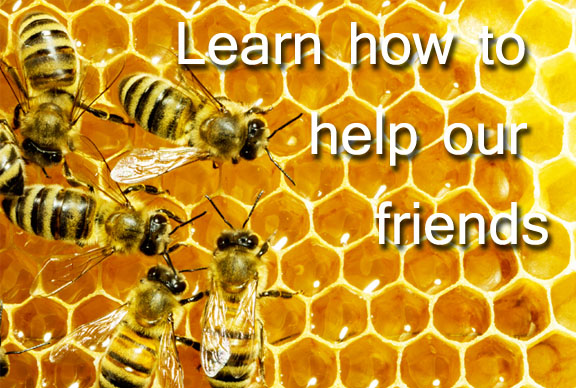 How to help the bees